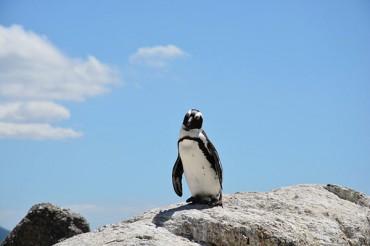 ペンギンは北極出身?