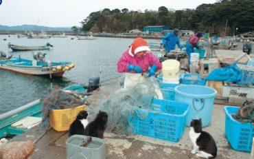 島ログvol.2 猫の楽園「田代島」
