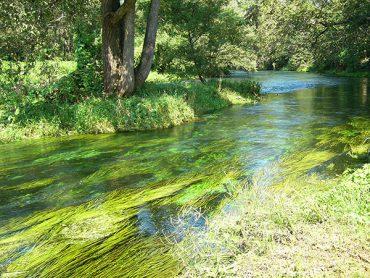 海藻のおはなし⑥海藻って海以外にもいるの?!