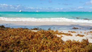 海藻のおはなし⑦日本で最初の海藻学者