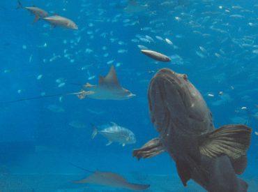 釣り魚の生態⑧産卵期は食欲にムラがある?